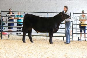 Durant sophomore Ava Hasting and her steer Stanley